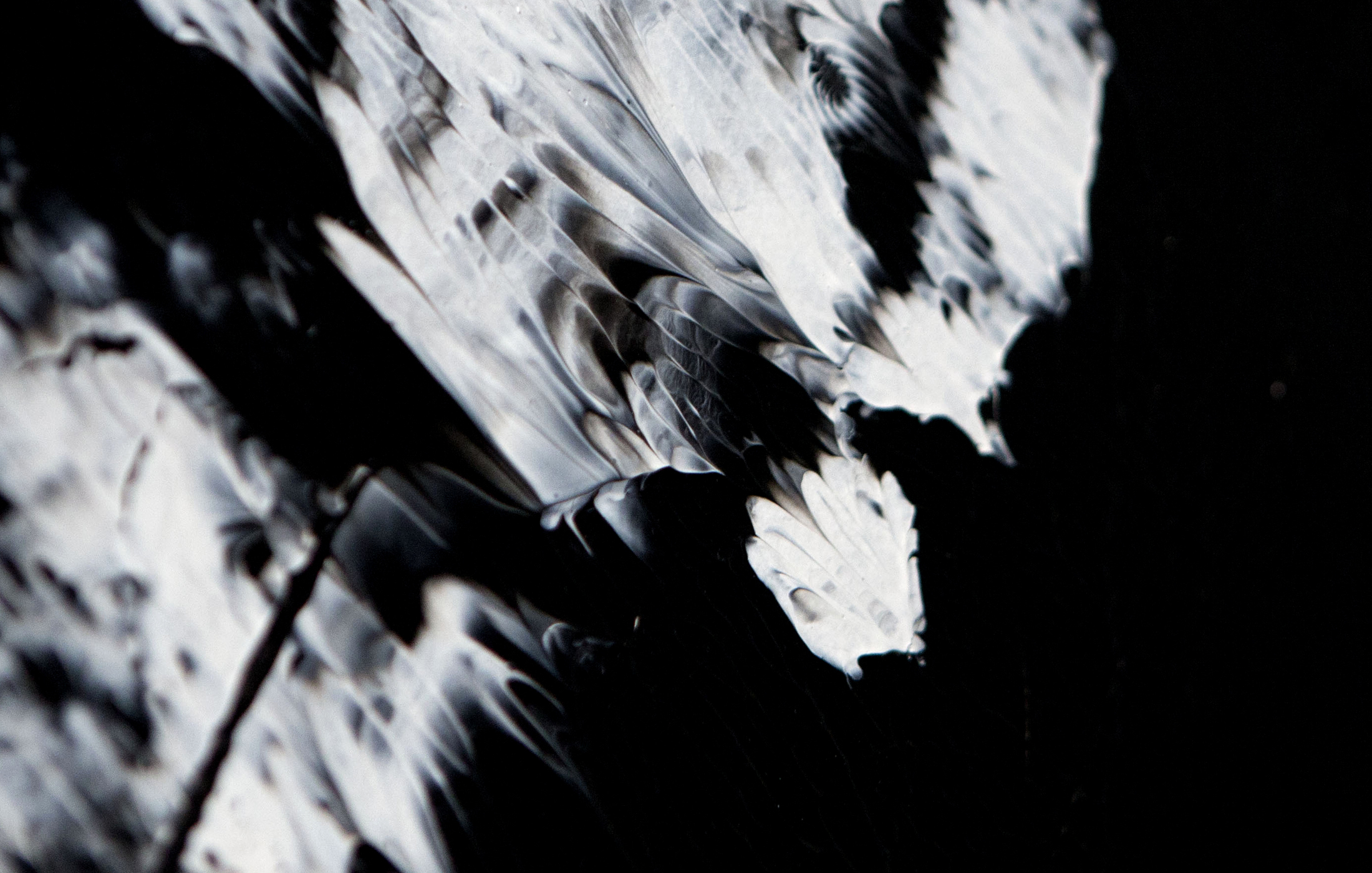 Agathe Toman Faithful Marilyn Painting Paint acrylic abstract french artist arts abstract contemporary contemporain fine black white modern gallery paris biarritz France